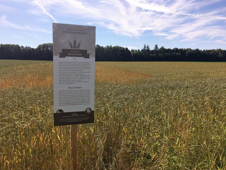 Infotafel über den Anbau alter Getreidesorten