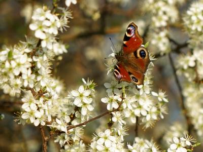 Artenvielfalt, das Schützen und Pflegen von Biotopen